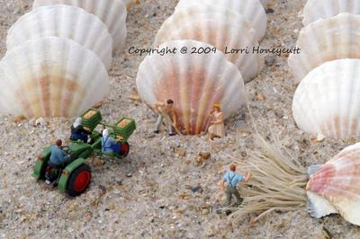 Sea Shell Harvest